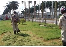 Cắt dọn cỏ thuê, chăm sóc cỏ tạo cảnh quan