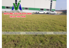 Dịch vụ cắt cỏ giá rẻ tại Hải Phòng